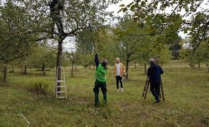 2020-10-02 Obstbaumschnitt Flittard