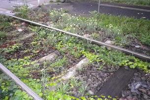 Biotop am Gleisbett in Köln Ehrenfeld