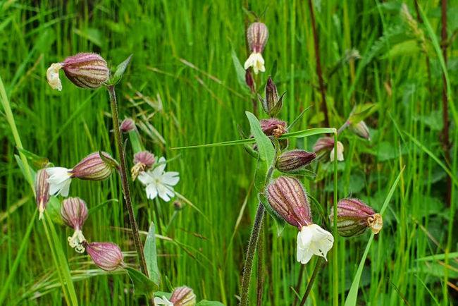 Pflanzenblüte in der Dellbrücker Heide
