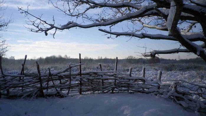 Dellbrücker Heide im Winter