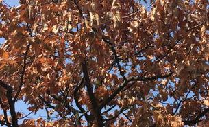 Klimawandel: Bäume vertrocknen in heißen Sommern