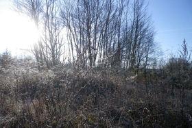 Winterimperssionen Dellbücker Heide