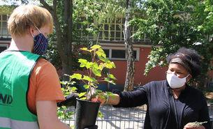 Naïma Stoll, Pädagogin des Offenen Ganztages an der Gemeinschaftsgrundschule Schmittgasse in Zündorf und Christian Fuß vom BUND Köln pflanzen einen neuen Johannisbeerstrauch.