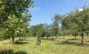 Die Flittarder Rheinaue im August