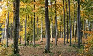 Laubwald Herbst Symbolbild