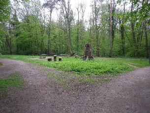 Thielenbrucher Wald