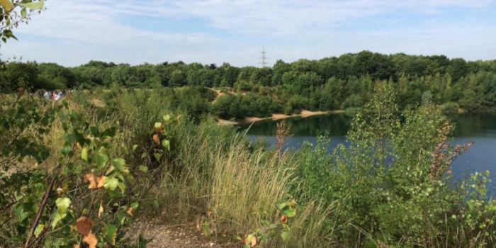 Dellbrücker Heide im Sommer