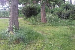 Baumscheiben im Alten Friedhof