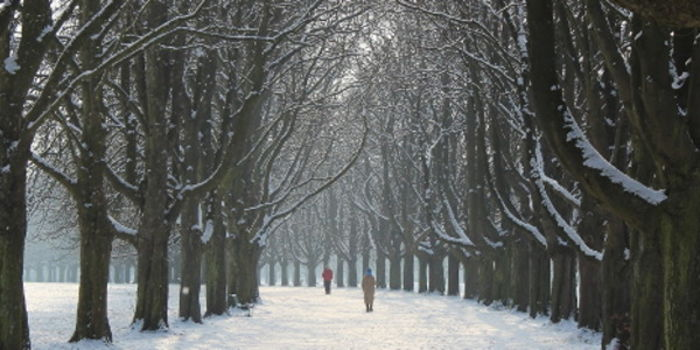 Grüngürtel im Winter