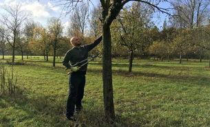 Obstbaumschnitt in Flittard