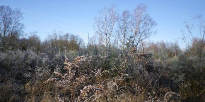 Winterimpressionen Dellbrücker Heide