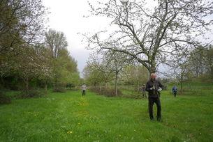 Obstbaumschnitt in der Flittarder Rheinaue